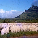 La Ferme – Aloes Fibres Drying in the Sun – 1968