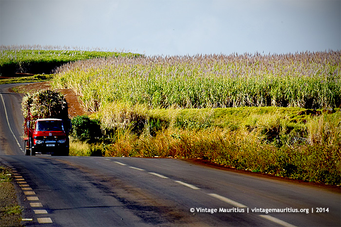 Bassin Sugar Estate - Lorry Carrying Sugar Cane - Mauritius - 2014