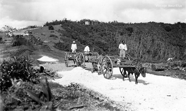 Curepipe - Trou Aux Cerfs - Concretising The Road - 1940s/1950s