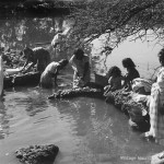Washerwomen in the river at Tamarin – Laundry Time