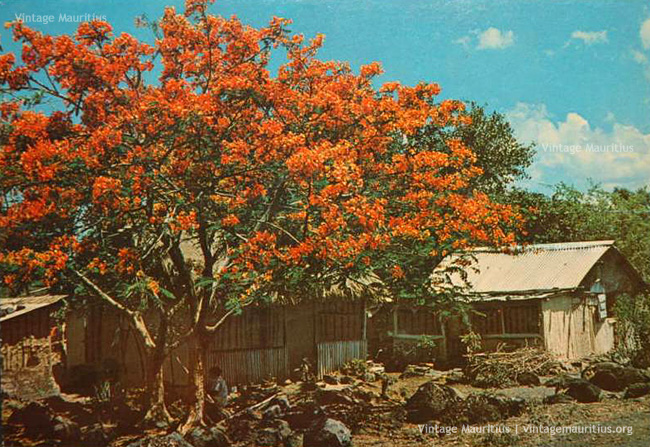Small wooden houses - Mauritius - 1970s
