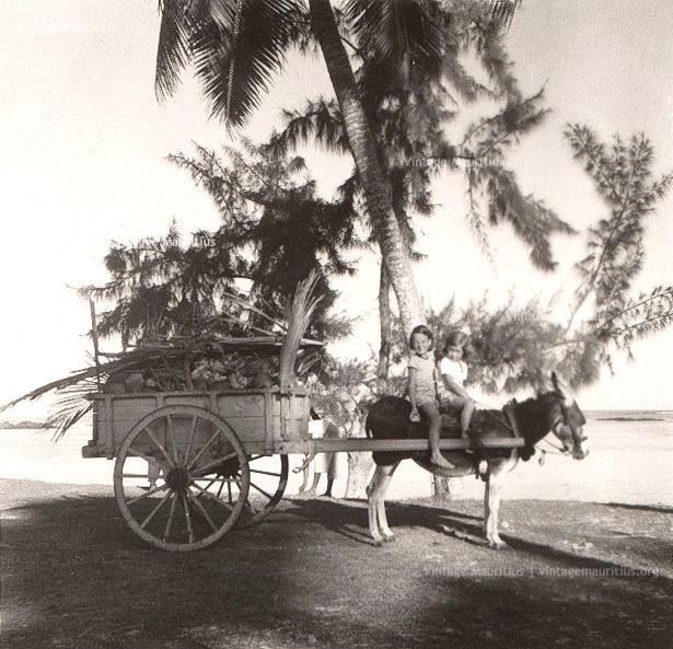Mule-Drawn Cart - Mauritius - 1960s