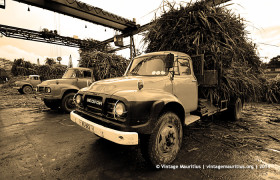 Old Bedford Lorries Mauritius Unloading Sugar Cane at MDA Factory