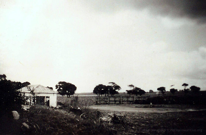 Old Quatre Bornes - Sugar Cane Fields - No Habitation - 1950s (Courtesy: Michel G. Langlois)