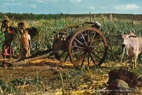 Ox Cart - Saret Bef - Charette a Boeuf - 1970s