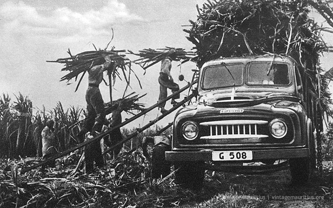 Traditional Loading of Sugar Cane - Austin Lorry - 1960s