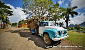 Turquoise Bedford Lorry J6 - With Sugar Cane Load - Mon Desert Alma - Mauritius
